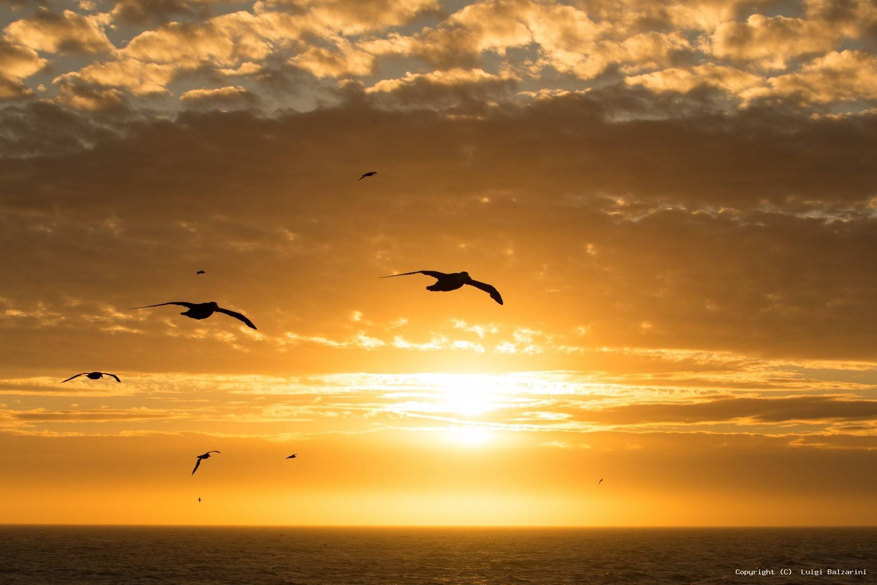 L'Albatross, il mio incontro