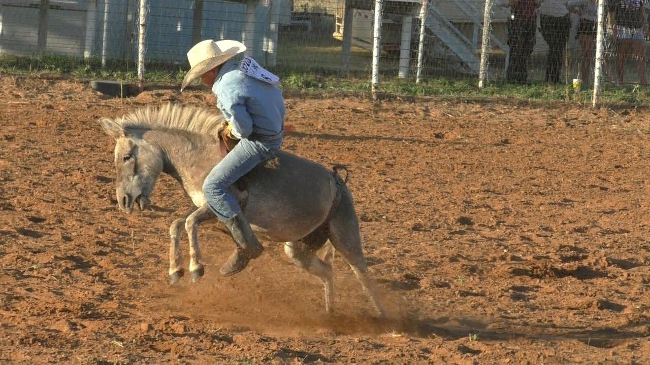 Un asino per rodeo